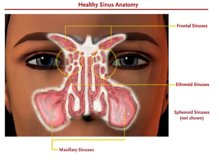sinus-anatomy