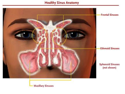 sinus-anatomy
