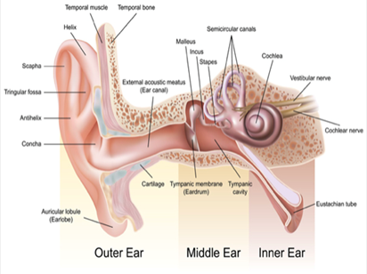 Ear Infection and Wax Removal Specialist Doctor